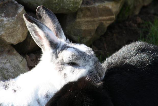 Bunnies Need Hugs Too