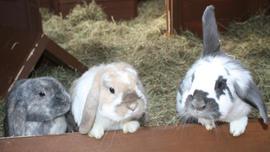 Thumper, Fudge & Bellini