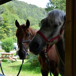 equitation camping2
