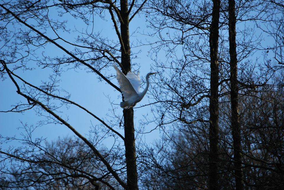 aigrette blanche camping