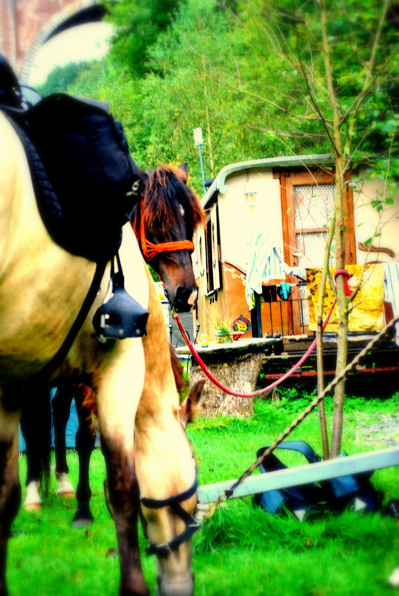 chevaux roulotte herbeumont camping