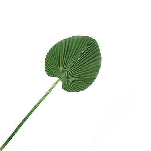 Folha de Palmeira Permanente