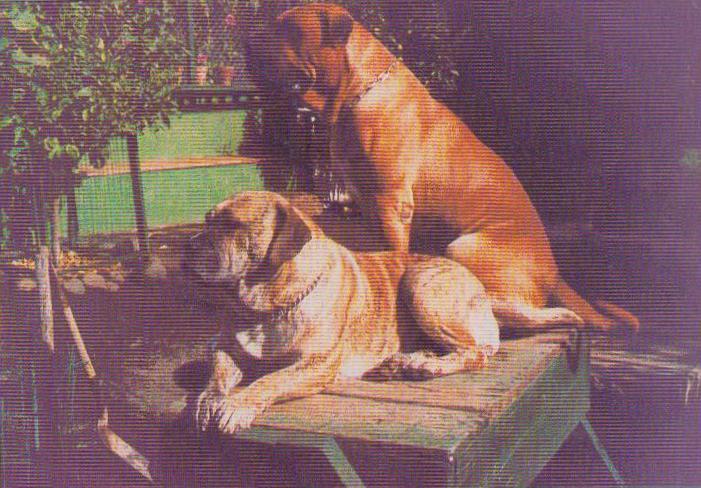 Patagón y Nuga