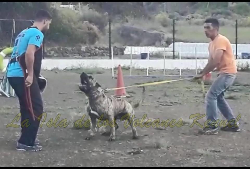 """""""RUSSO de la Isla de los Volcanes"""""""