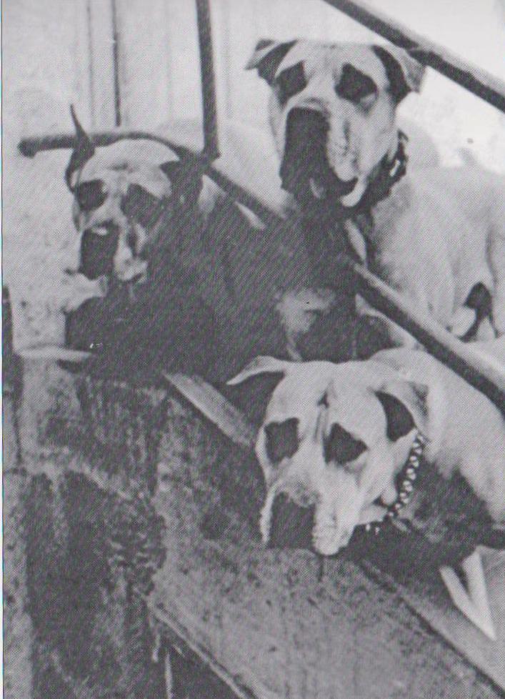 Laika, Manolo y Troika