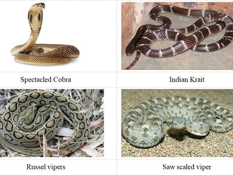 Snakebites in Domestic Animals an Overview