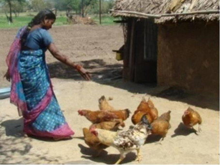 Benefits of Backyard Poultry Farming: A Trend in Rural India