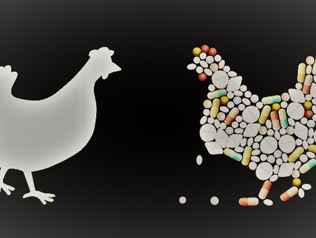 Factors to be considered for Improvement of Gut Health to achieve Antibiotic Free Poultry Production