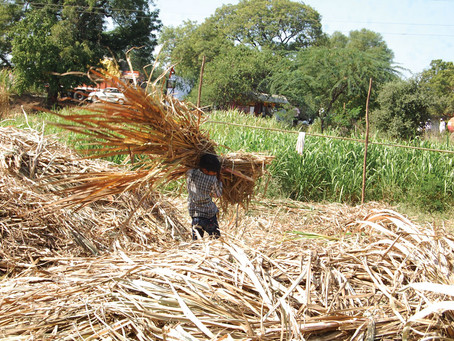 Feed and Fodder: The Challenges India to Face in Coming Future