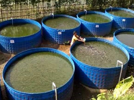 Biofloc Technology as Sustainable Income Source: New Aquaculture Model