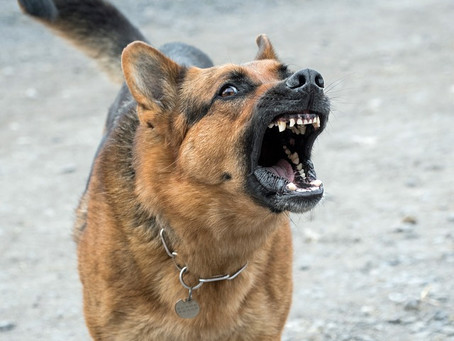 Aggressive Behavior and its Management in Dogs