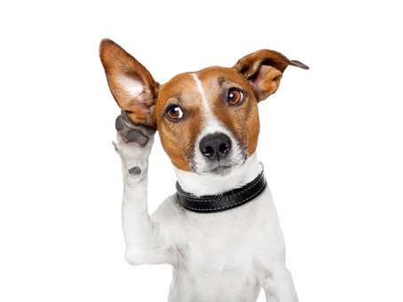 Decoding pet sign language: what your dog wants to say ?