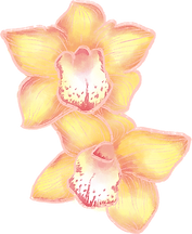 Orchid blommor