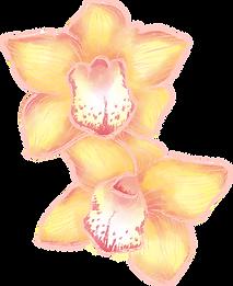 Fleurs Orchid