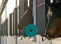 Horses - Video Capture II.jpg