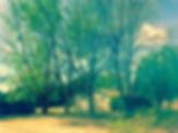 tree%20before_edited.jpg