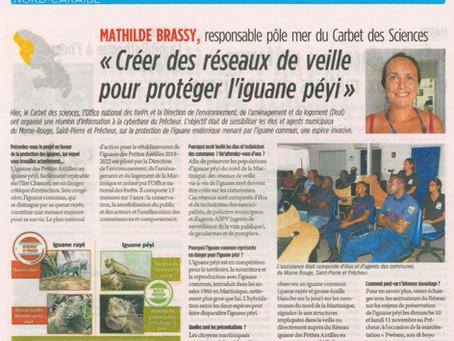 """""""Réseau de veille iguane rayé"""" dans le Nord de la Martinique"""