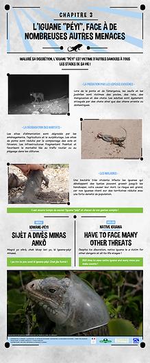 iguane péyi, menace, antilles