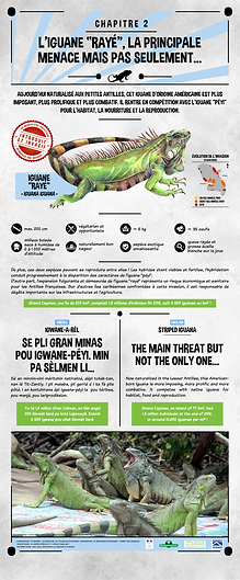 iguane commun, iguane rayé, antilles