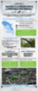 iguane péyi, soyez les yeux du réseau, antilles