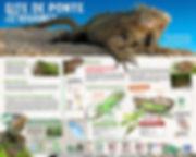 Panneau iguane péyi, îlet Chancl