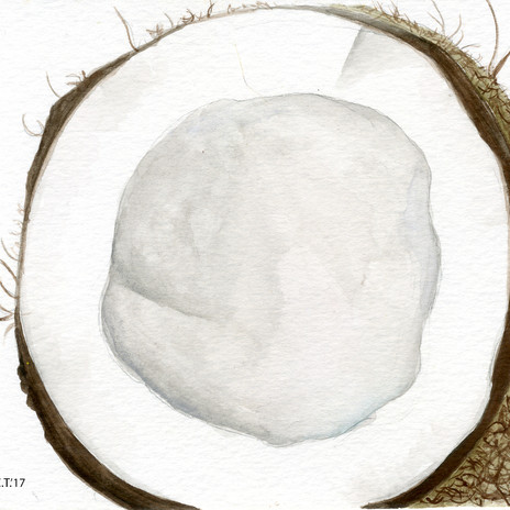 Coconut Watercolor