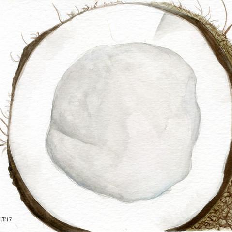 Coconut Watercolor