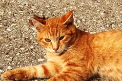 Auch Katzen entspannen gerne-