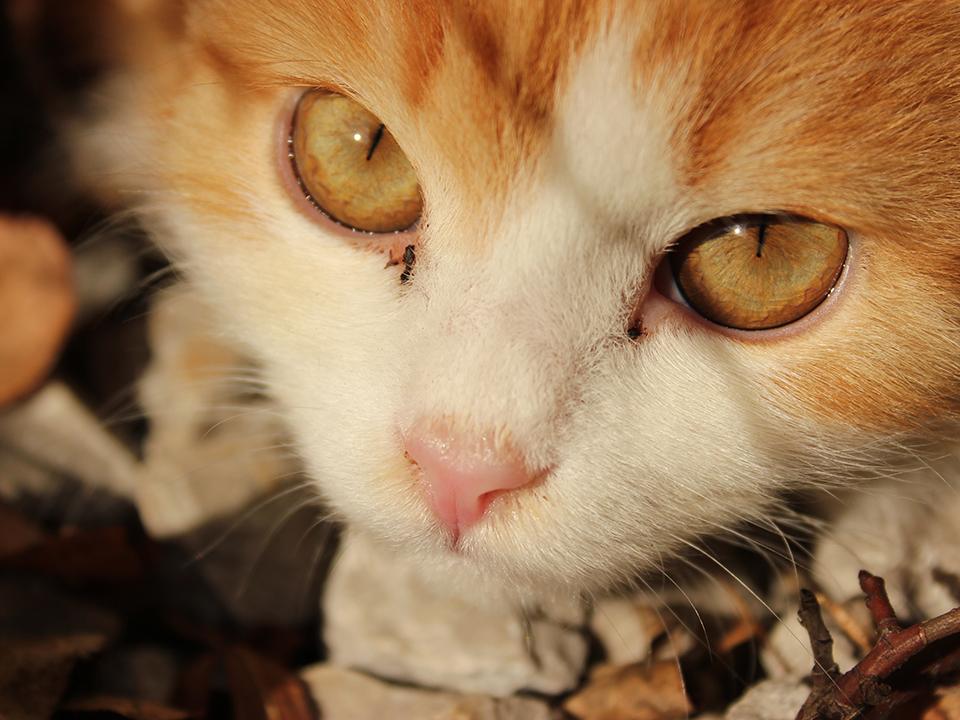 Schau mir in die Augen, Kleines ;)