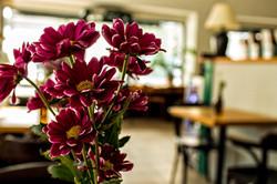 Květiny v Tobruku