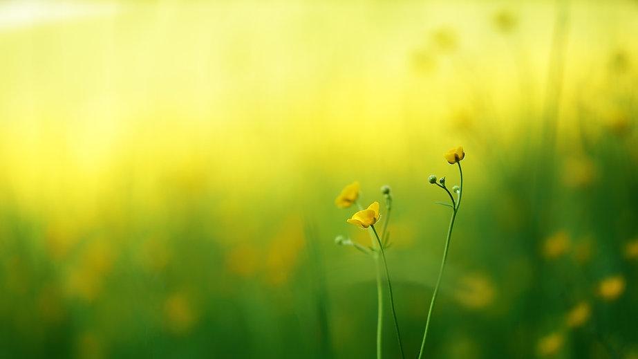 nature-3092005_1920.jpg