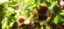 evergreen_home_edited.jpg