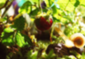 evergreen_home.jpg
