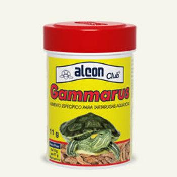 Alcon club gammarus