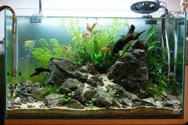 Aquario 50 x 70