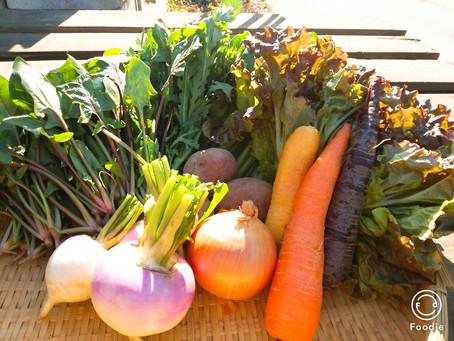2月14日お届け野菜セットおすすめレシピ