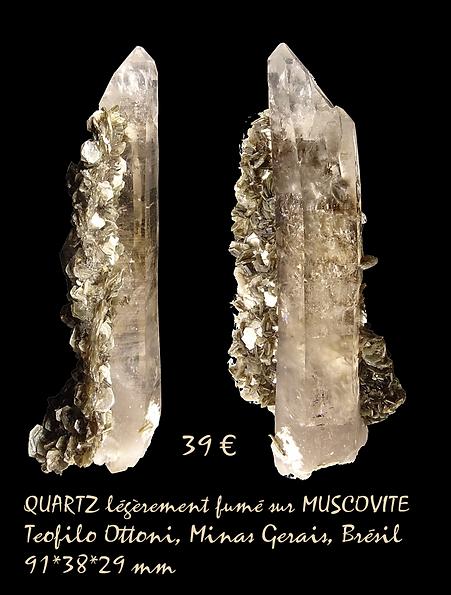 QMusc39.png