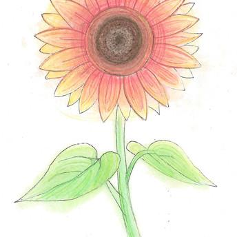 Sunflower/Blodyn yr Haul by/gan R
