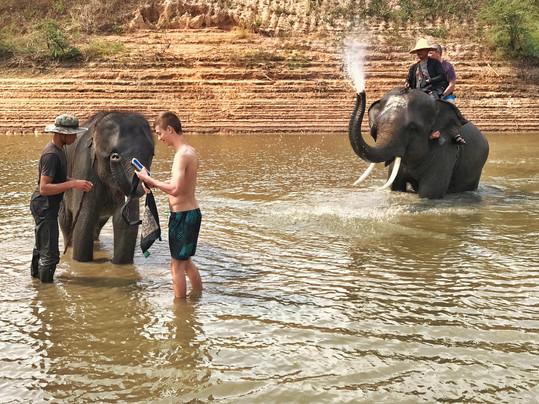 baignade avec des élépha nts
