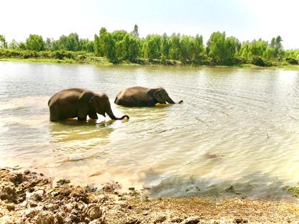 Elephants en liberte