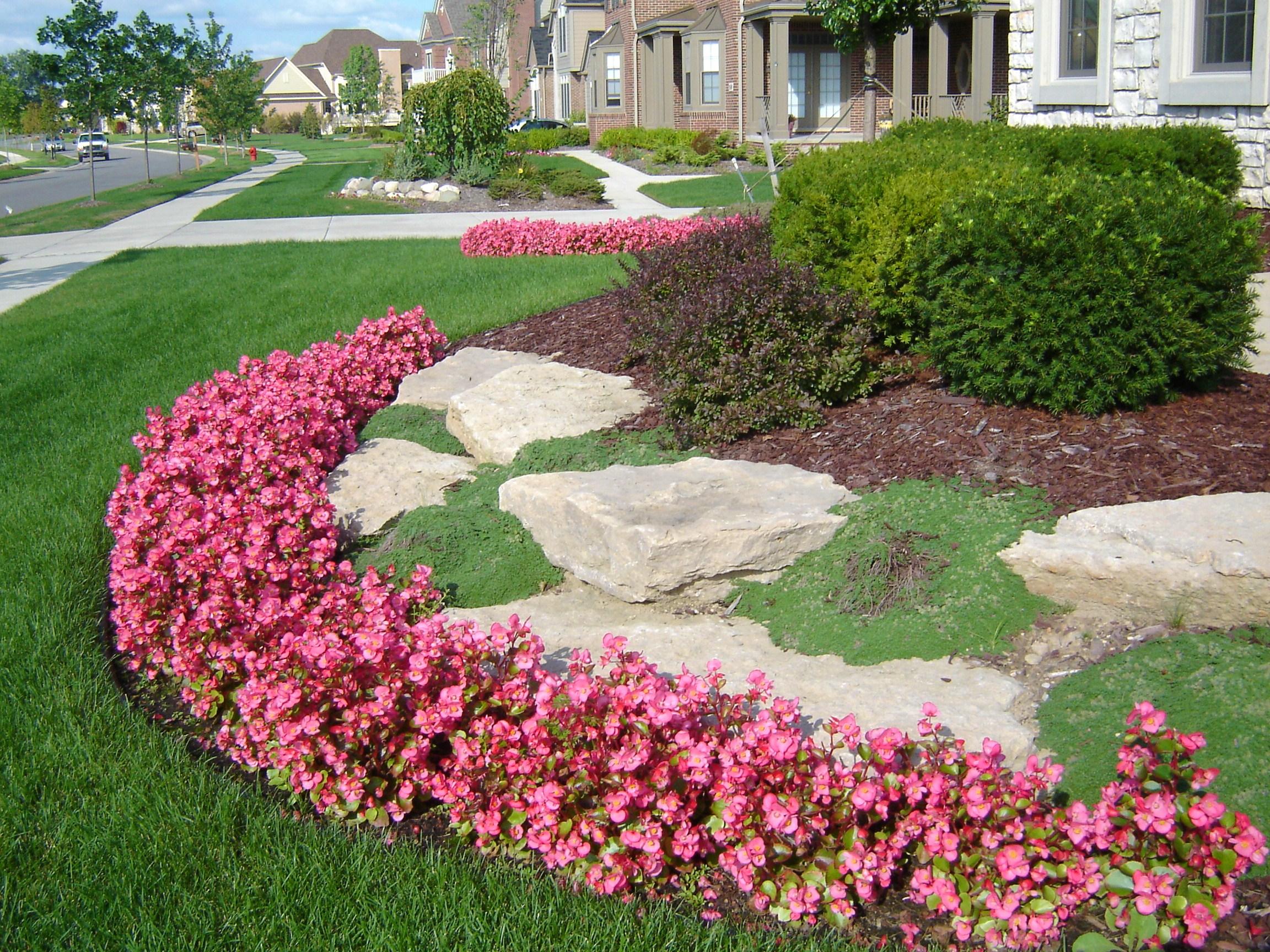 Annuals And Perennials 1.JPG