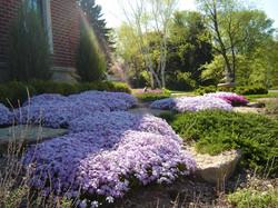 Annuals And Perennials.JPG