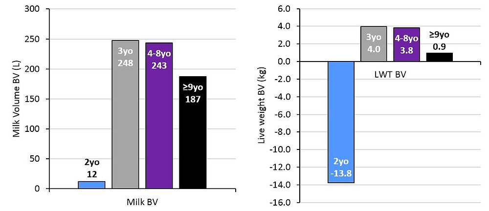 Figure 4: The estimated milk volume (L) and live weight (LWT) breeding values before first calving for heifers that were born to dams aged 2, 3, 4-8 or 9 years and over.
