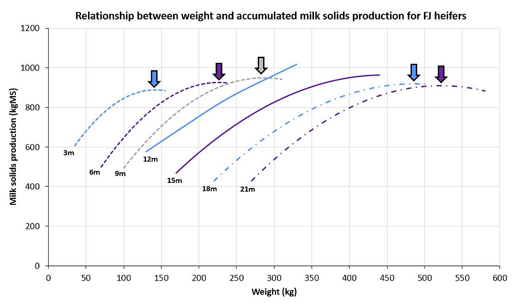 The relationship between weight and accumulated milk solids production for Holstein-Friesian-Jersey crossbreed dairy heifers aged between 3 and 21 months of age (m)