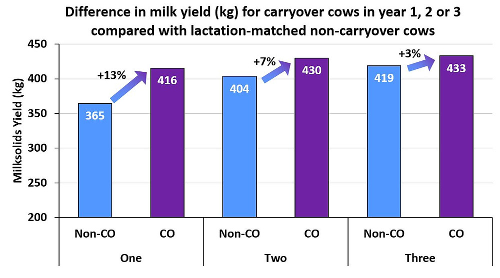 Figure 1. Average milksolids yield (kg/year) for carryover (CO; purple) cows in year 1, 2 or 3 after returning to the herd compared with non-carryover (NCO; blue) cows of the same lactation number