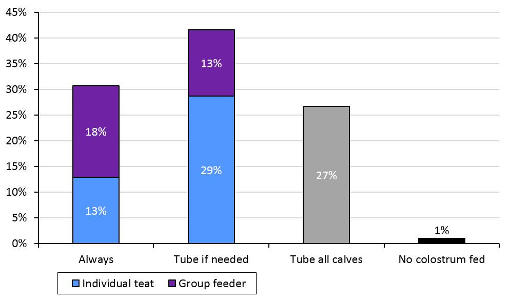 Proportion of respondents that fed dairy calves their first colostrum with group feeder, individual teat or tube feeding.