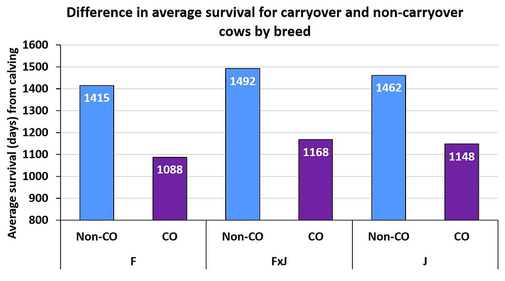 Average survival for non-carryover (Non-CO; blue) cows and carryover (CO; purple) Holstein-Friesian (F), Jersey (J) or FxJ crossbred cows after their second parturition date (day 0).