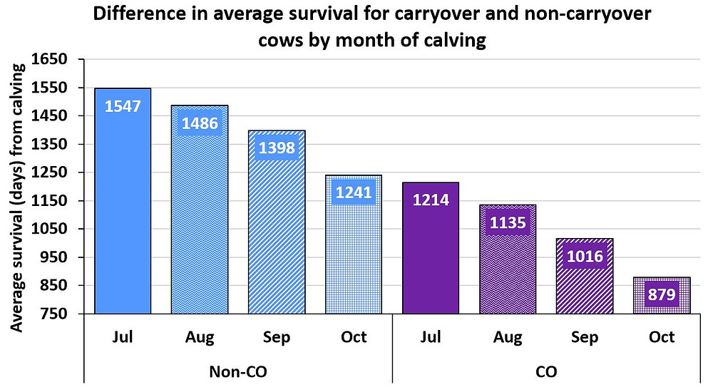 Figure 5. Average survival for non-carryover (Non-CO; blue) cows and carryover (CO; purple) cows after their second parturition date (day 0) that calved in July (Jul), August (Aug), September (Sep) or October (Oct)..