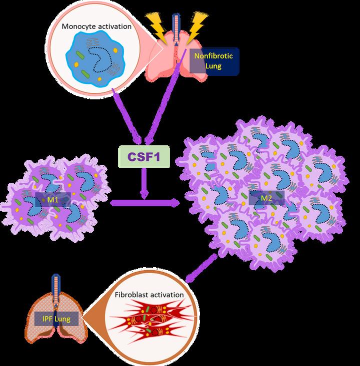 IPF schematic 2.png