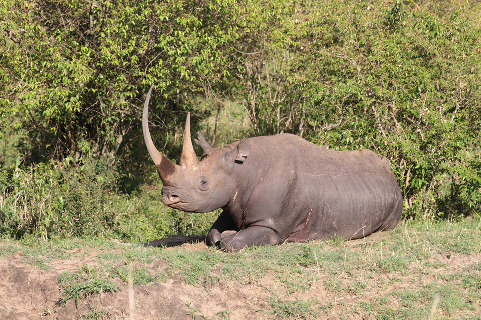 Spirit of the Masai Mara - Rhino 2